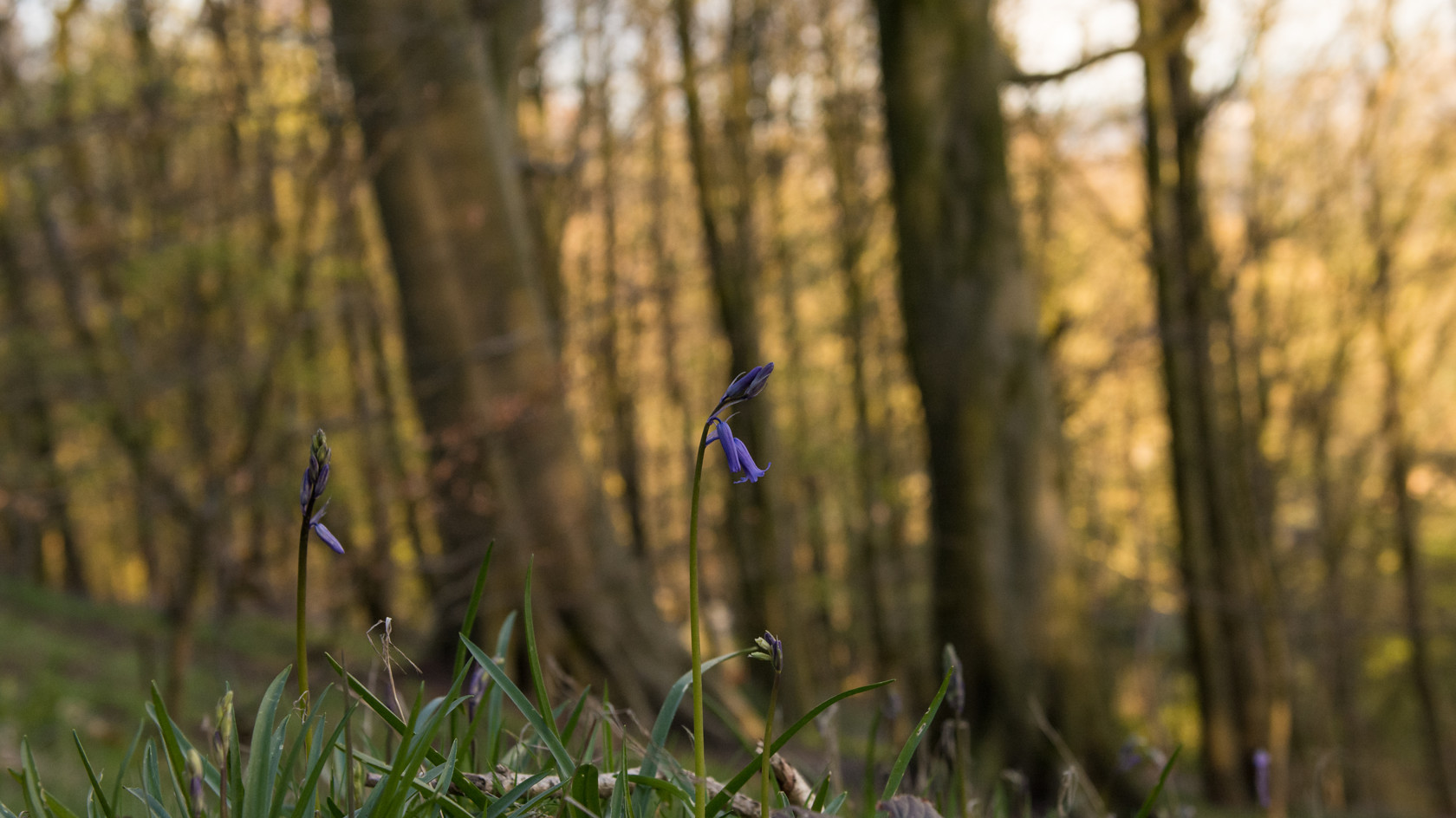 simple beauty of spring (ref mn 182) 