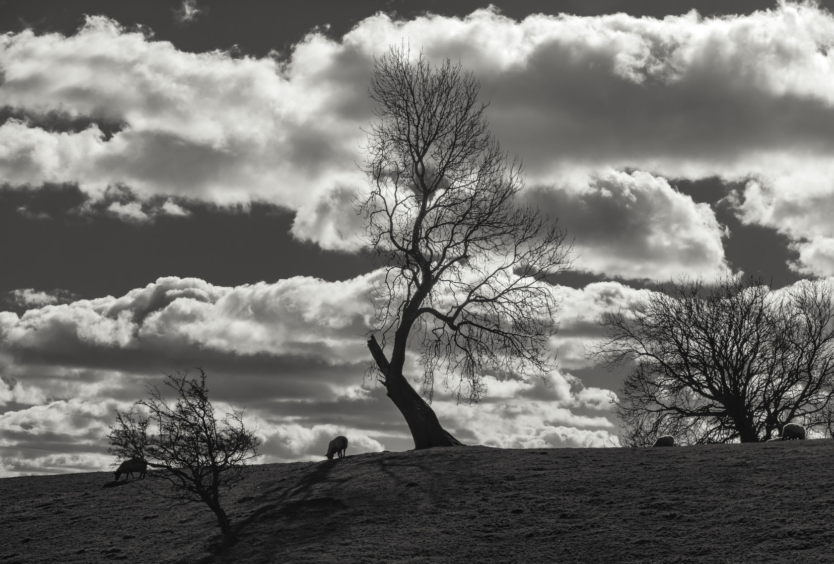 broken tree, menston (ref av 456) 