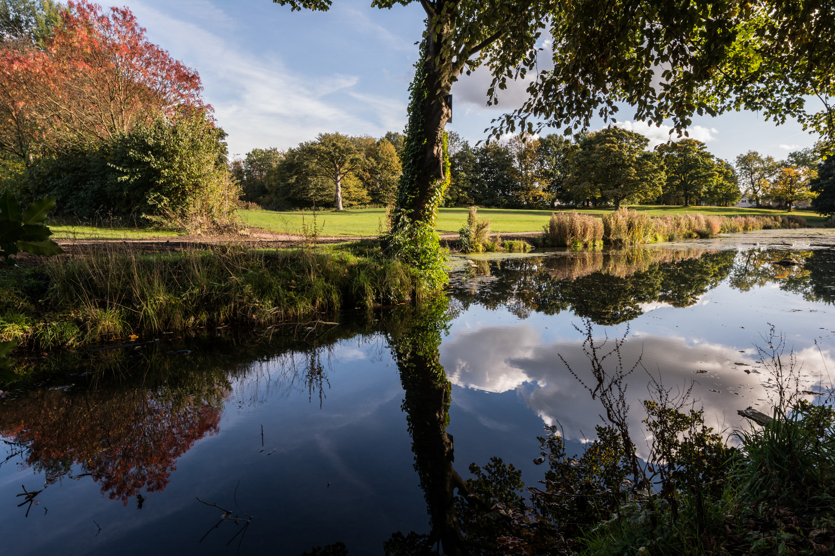 summer reflections, nunroyd park (ref av 121) 